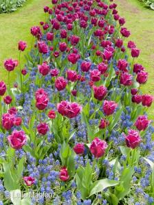 Ein Traumpaar in pink und blau
