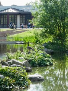 Wassergarten im Grugapark