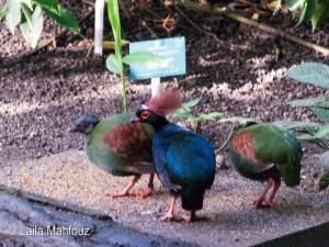 Überraschende Farbflecken im Tropenhaus