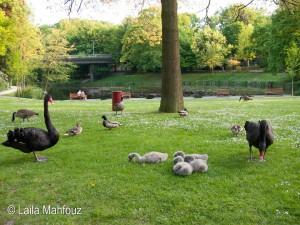 Ein Wasservogelparadies: Hier tummelten sich Trauerschwäne, Kanadagänse, Nilgänse, Enten und ein Pelikan.
