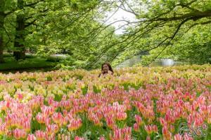 ...im Meer der Tulpen