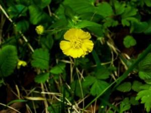 Frühling am Mattsee: Wildkräuter-Entdeckungen mit Prof. Michael Hohla und eine Unterbringung im Paradies