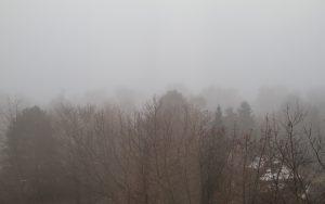 Nebel (Foto: Laila Mahfouz)